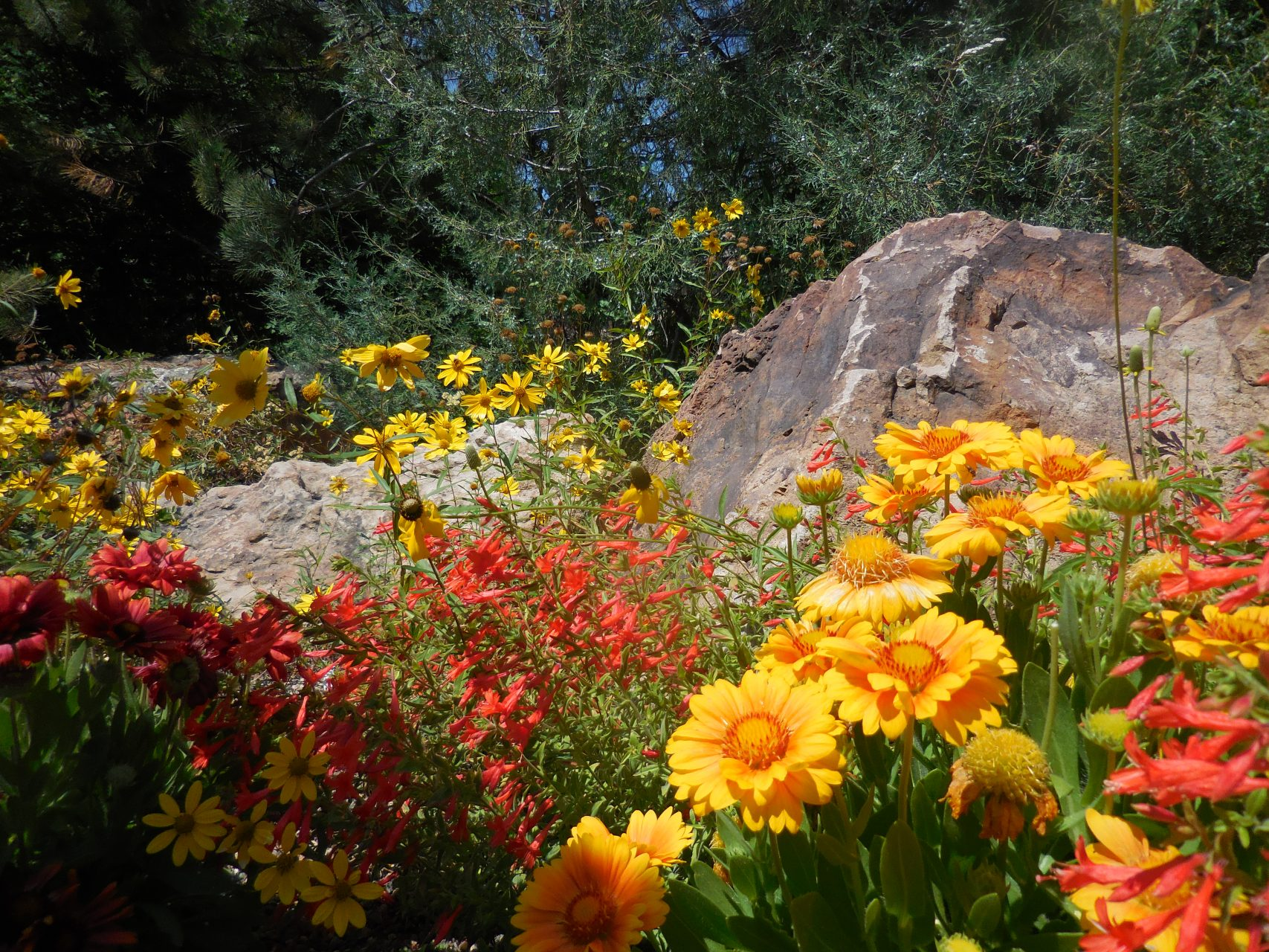 How Does Your Garden Grow Betty Ford Alpine Gardens In Vail